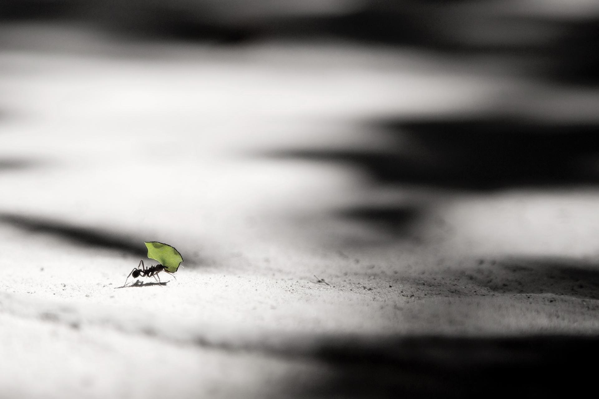 ant_leaf