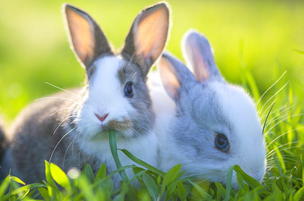 2 kaniner ved siden av hverandre ute på gresset