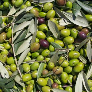 olio d'oliva umbro