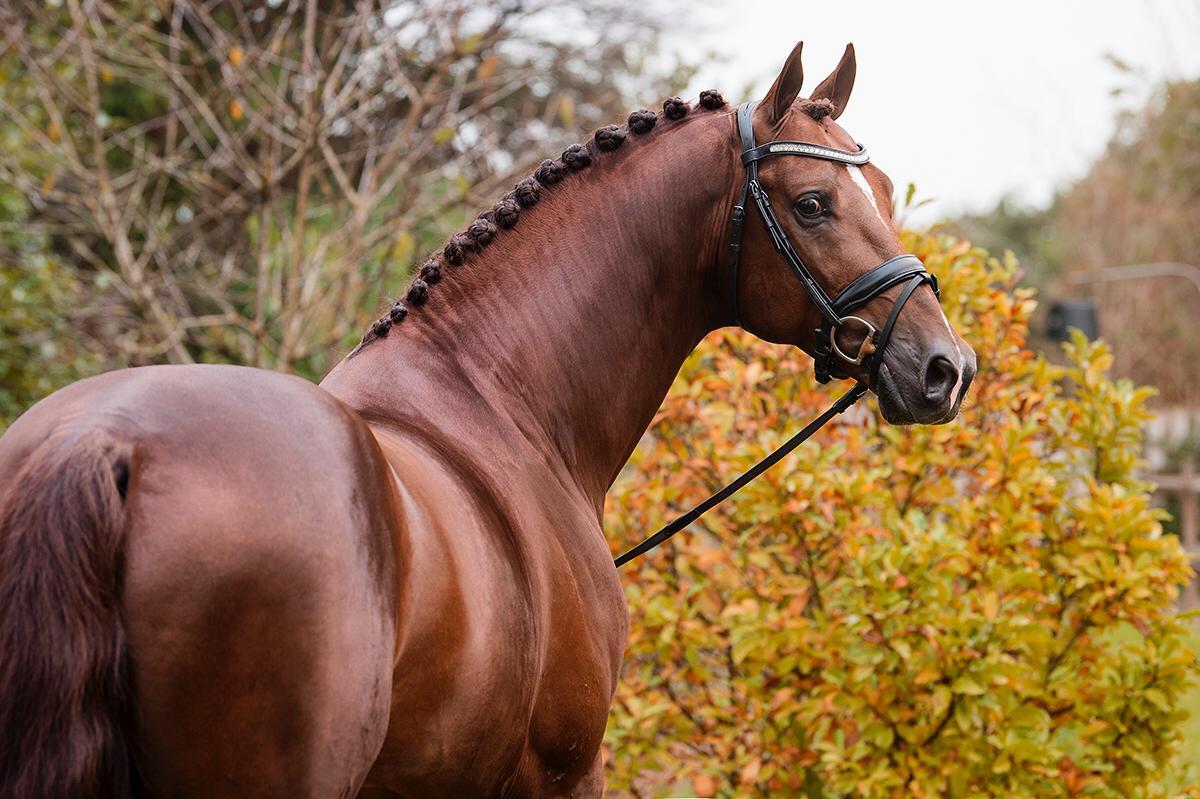 Lindenburg Sporthorses