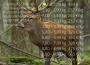 Jagd auf Hirsche und Wildschweine