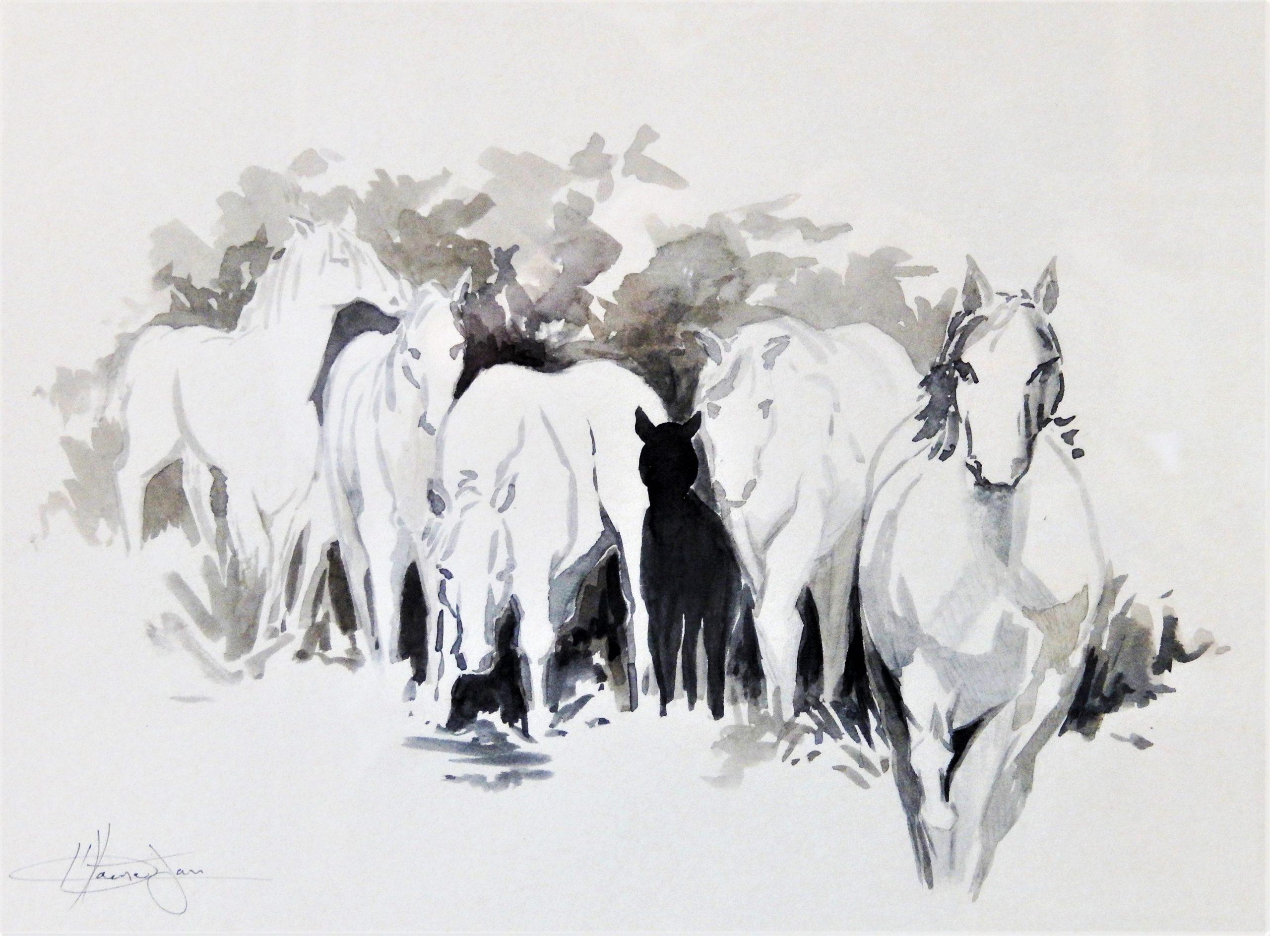 678 paarden (Camargue) 1