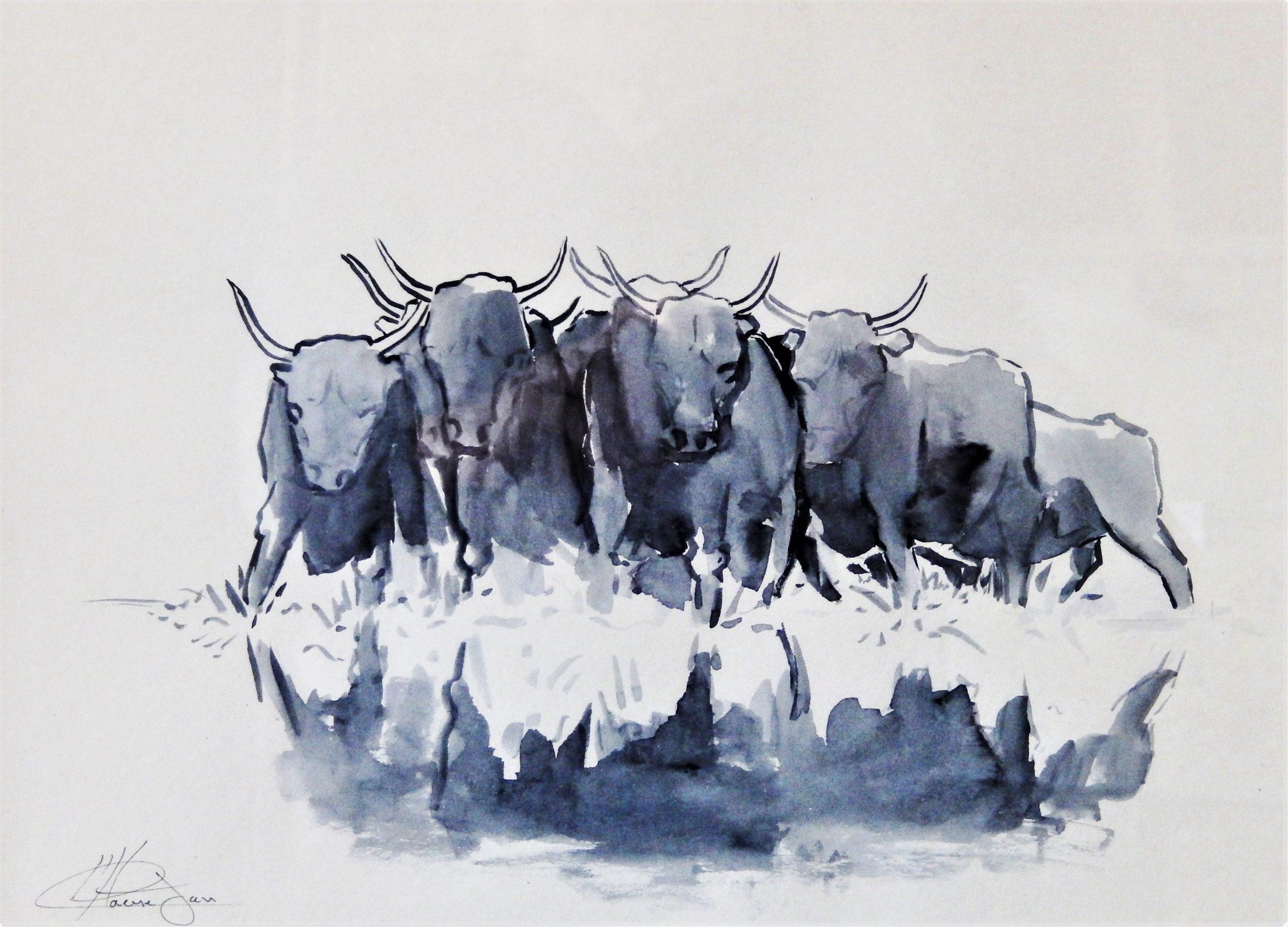 680 koeien (Camargue) 1 schets