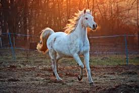 Overcoming Horseriding anxiety with hypnotherapy.
