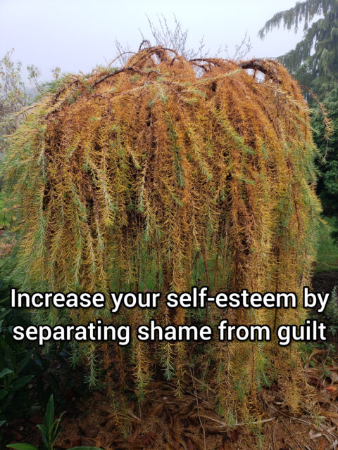 Increase your self-esteem by separating shame from guilt