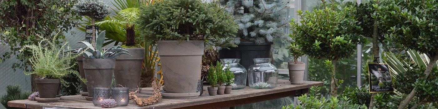 Udendørs planter unikke planter