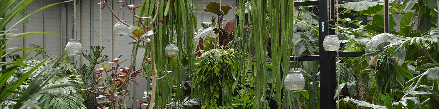 JH Engros planter drivhus udstilling