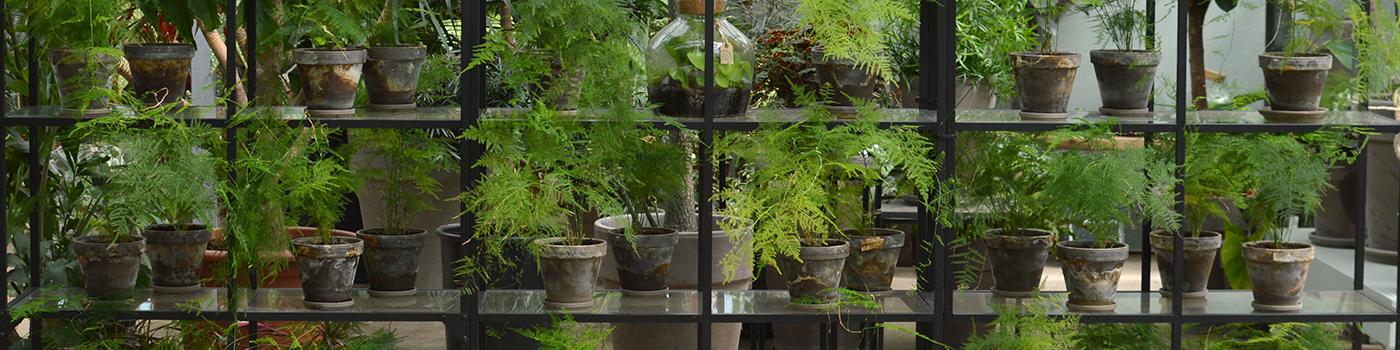 unikke plantevægge