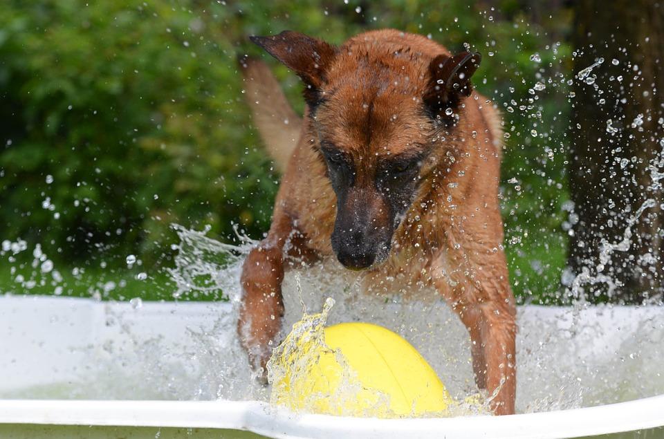 Dog splashing in pool