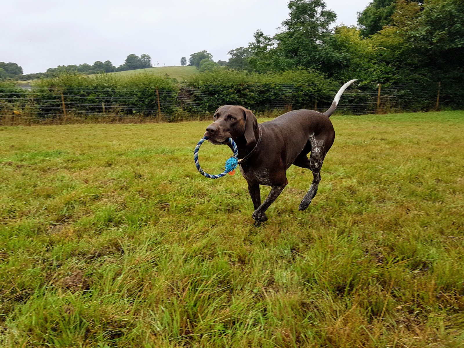 Joey's Doggie Day Care & Adventure Park - Countryside