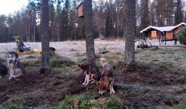 Cabin in het bos met huskies