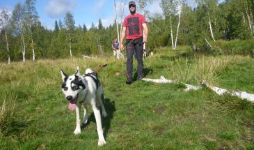 norrland walk with dog