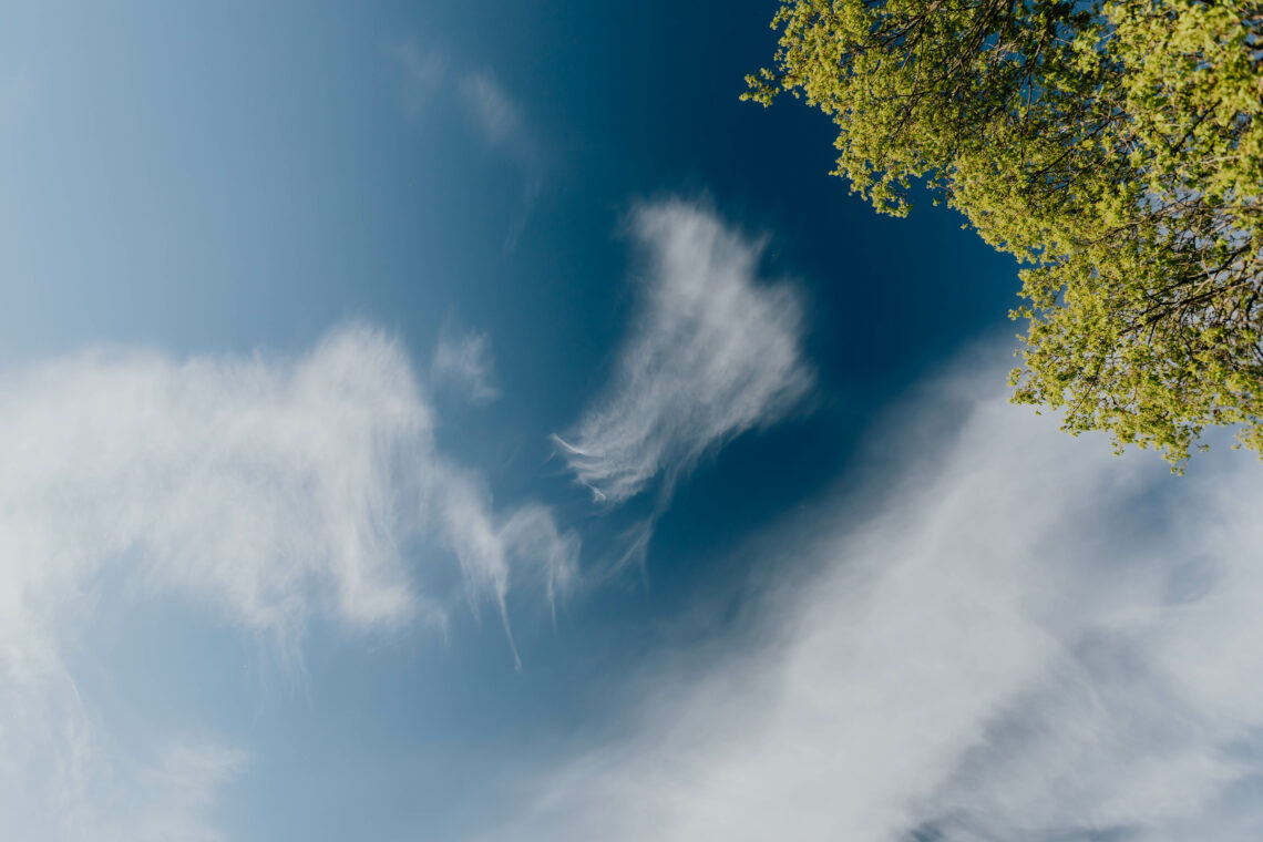 blue sky with some clouds and parts of a tree