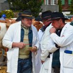 Cattleshow judges