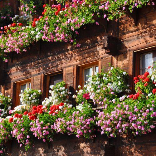 flower fassade