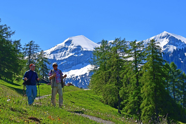 Hikers in summer