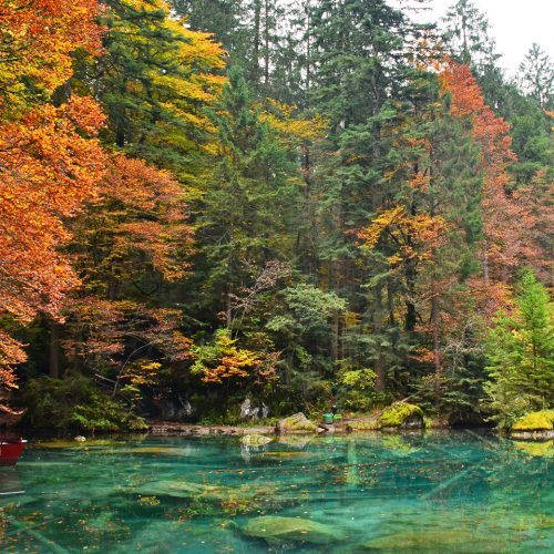The crystal clear bluish water of the Blausee