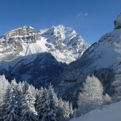 White trees above Kandersteg in the Bernese Oberland