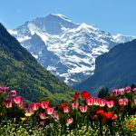 Spring in Interlaken with a touch of Holland and the Jungfrau