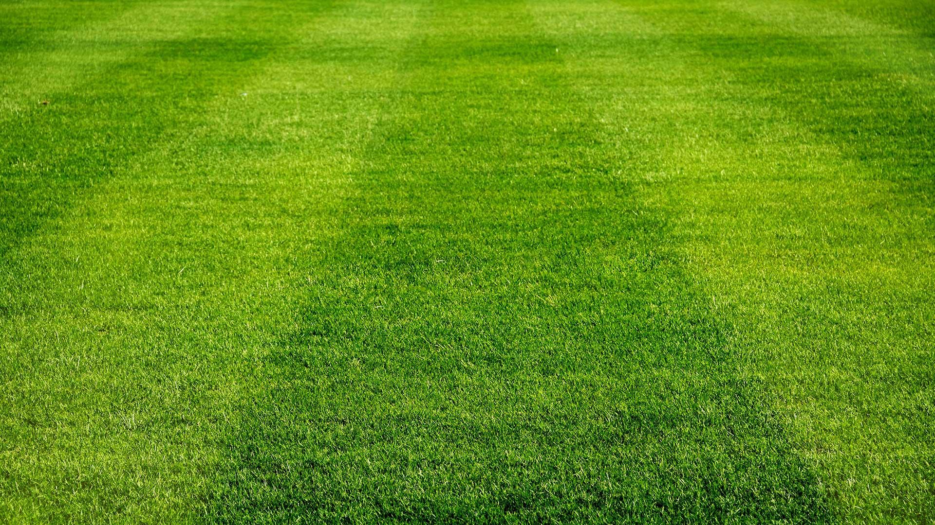 jeugdvoetbal voetbalveld gras