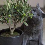 Waarom eet mijn kat mijn kamerplanten op?