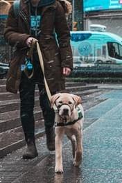 Hond met Gentle Leader