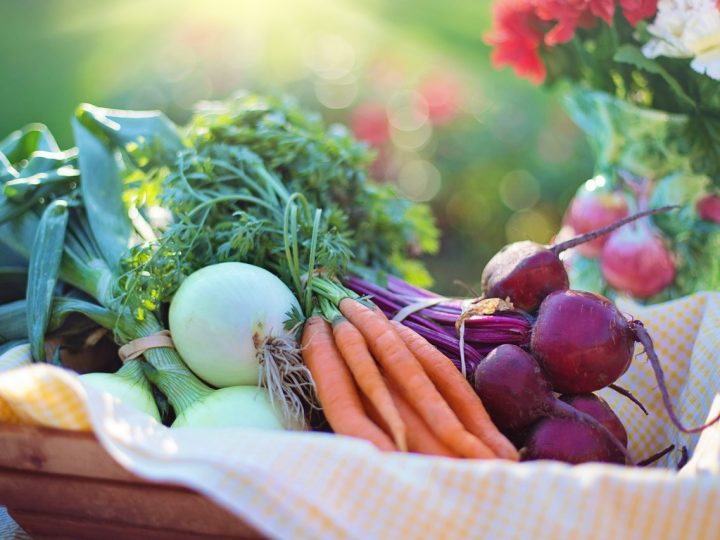 Carrot and turnip cultural products