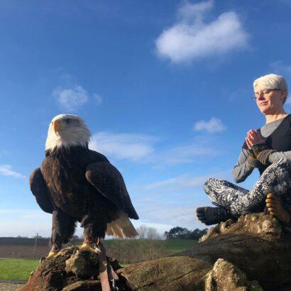 eagle.meditate