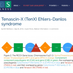 This picture shows a simplified illustration of the RCCX gene locus which includes Tenascin XB