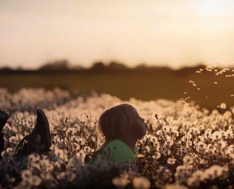 ontspanning paardenbloem veld natuur_Katrien Cocquyt orthomoleculair voedingsdesundige integrale gezondheidszorg stressreductie_flowers-2562079_1920