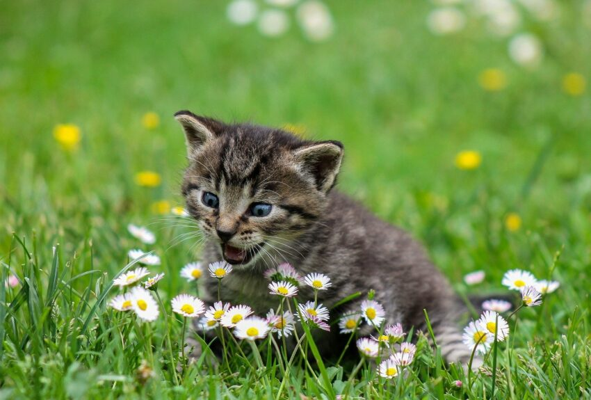 Kattunger 12 uker
