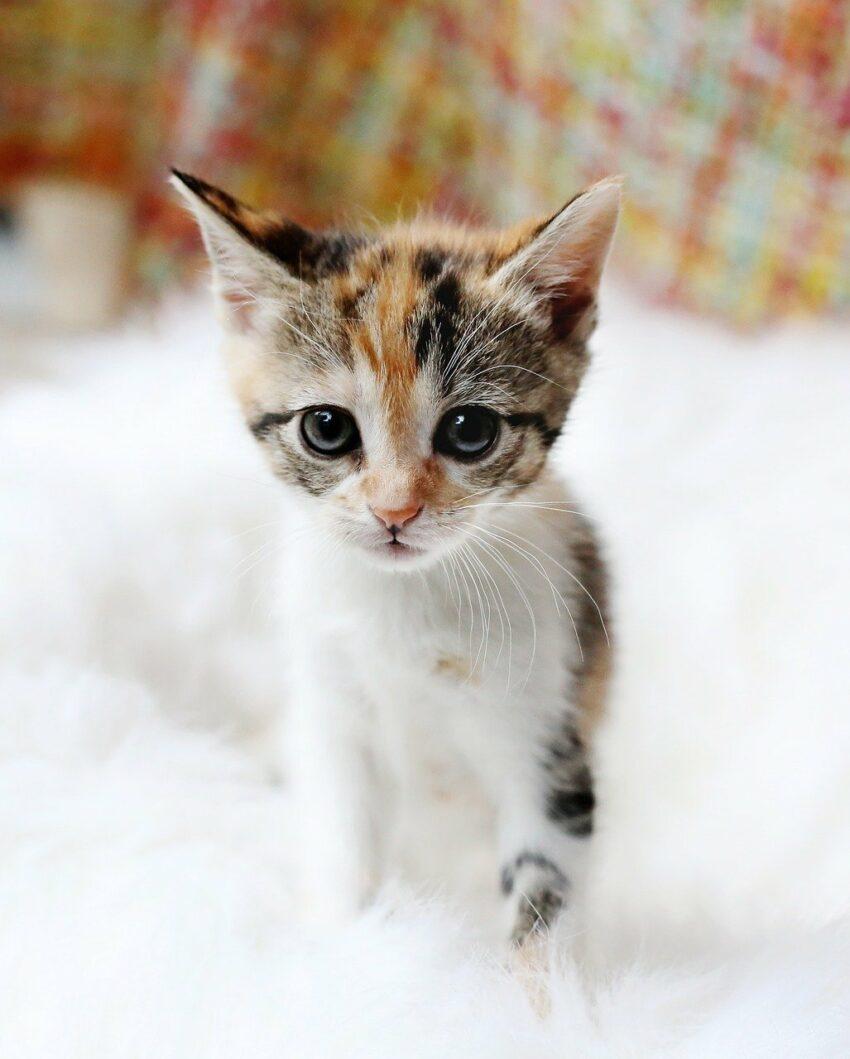 kattunge redde øyne dikt