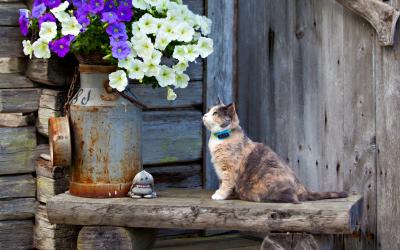 Ljusbrun katt med SmartCat GPS minne i halsband