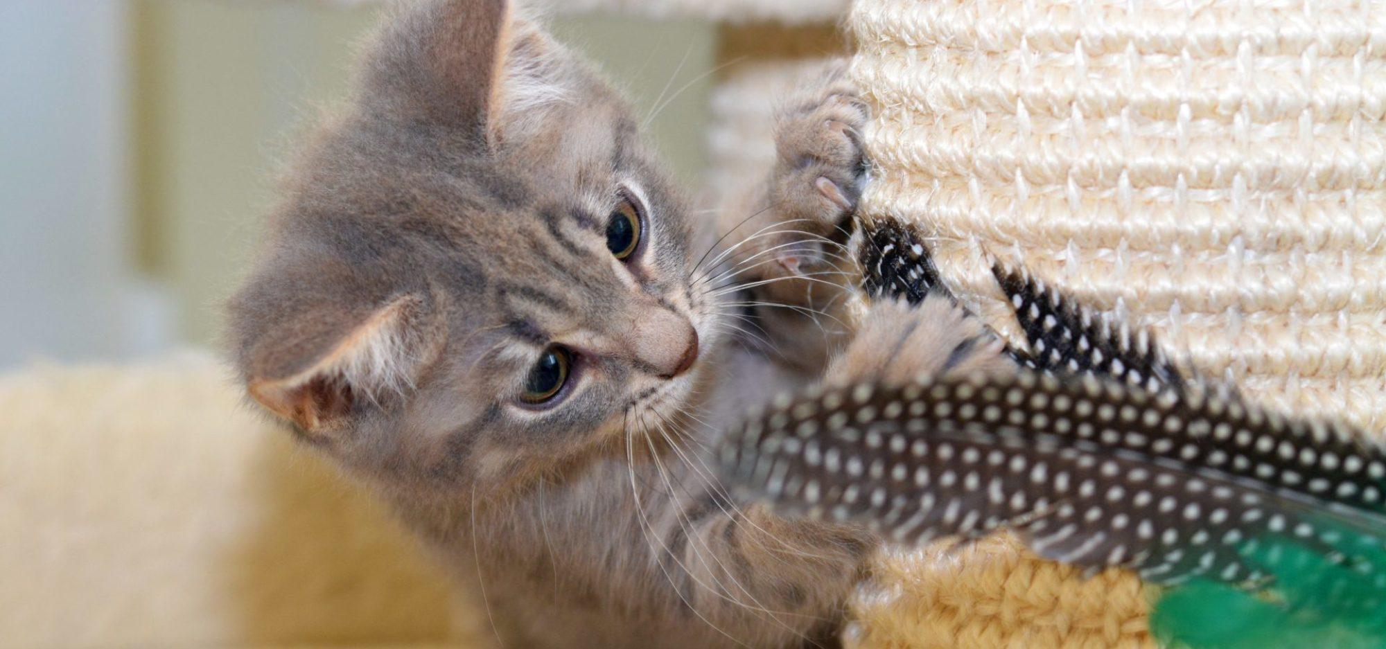Kattstallets volontärer