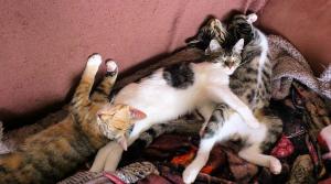 drei Katzen liegen dicht beieinander auf einer Decke