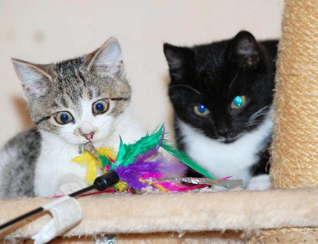 zwei kleine Katzen, grau-weiß und schwarz-weiß auf einem Kratzbaum