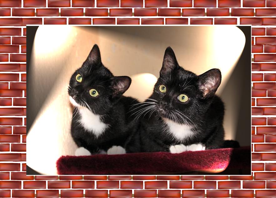 zwei schwarz-weiße Katzen auf einem roten Kissen, fast gleich aussehend, mit gleicher Kopfhaltung nach rechts oben