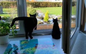 zwei schwarze Katzen im geöffneten Fenster, einer gerade nach draußen steigend