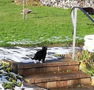 kleine schwarz-weiße Katze im Garten