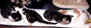 vier Kitten auf einer Decke