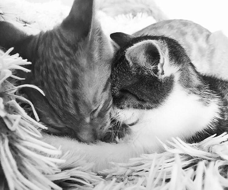 schwarz-weiß Foto von zwei dicht beieinander liegenden Katzen auf einer Decke