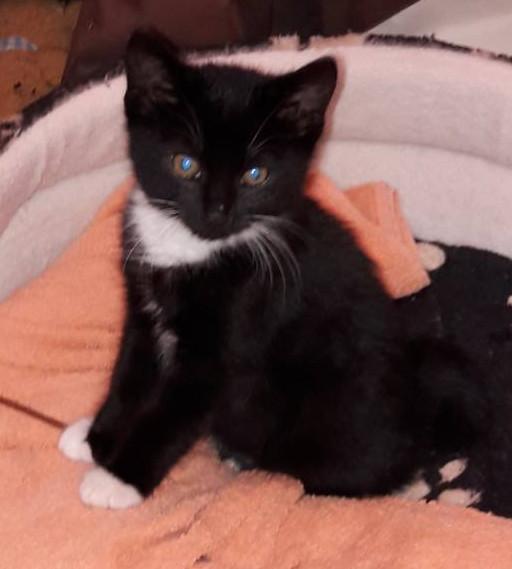 kleiner schwarz-weißer Kater sitzt auf einem Kissen