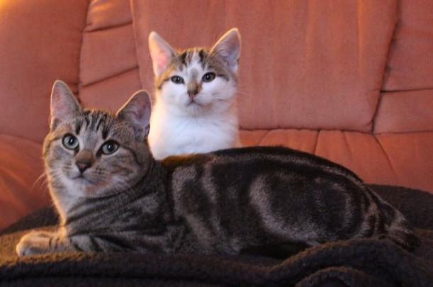 zwei Kitten auf einem Sofa
