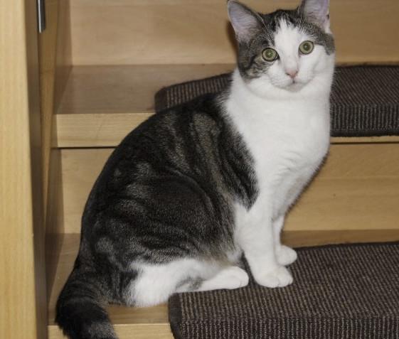 weiß-grauer Kater sitzt auf einer Treppenstufe