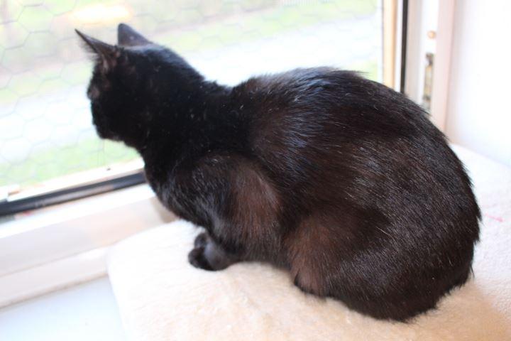schwarze Katze sitzt auf der Fensterbank