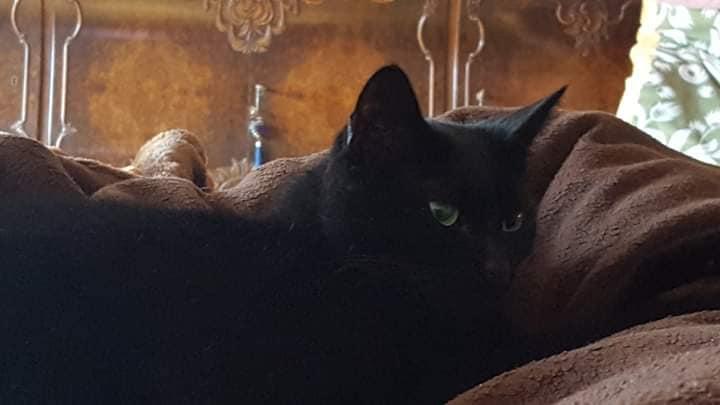 schwarze Katze liegt auf einer braunen Decke
