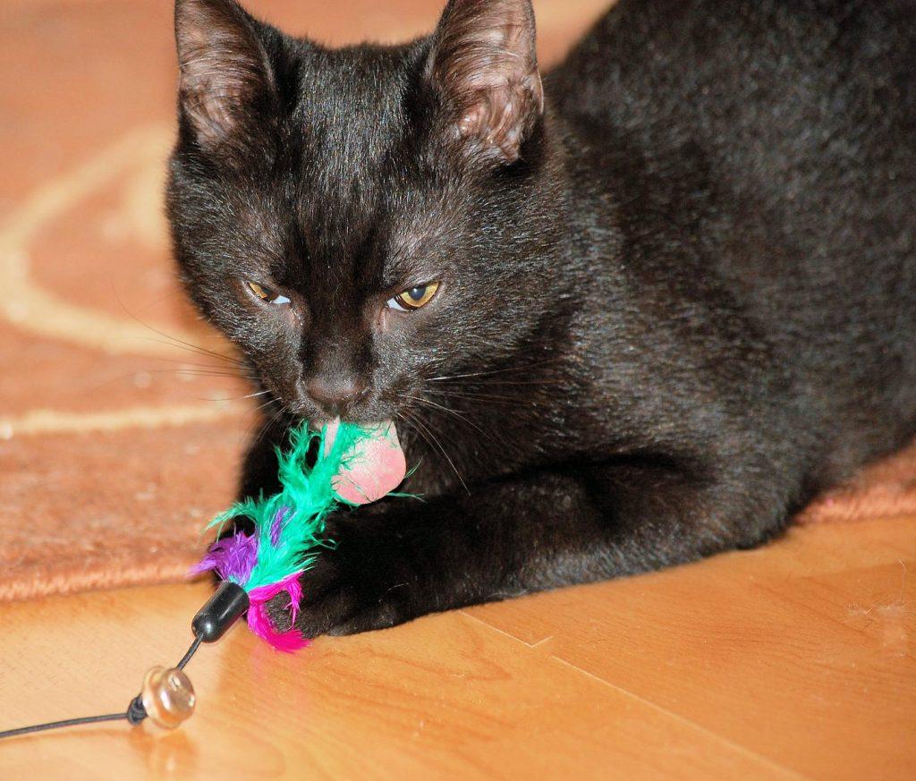 kleiner schwarzer Kater mit einem Spielzeug