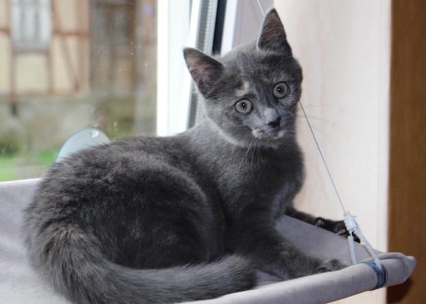 kleine schwarze Katze auf einer Fensterliege