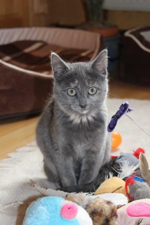 kleine schwarze Katze mit Spielzeug auf einem weißen Teppich