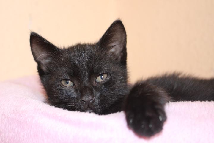 kleiner schwarzer Kater schaut über den Rand eines Katzenkissens